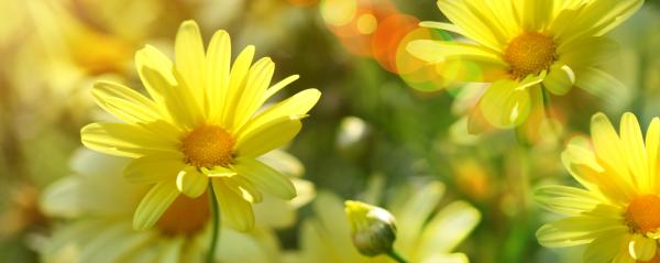 spring-sunshine(1)