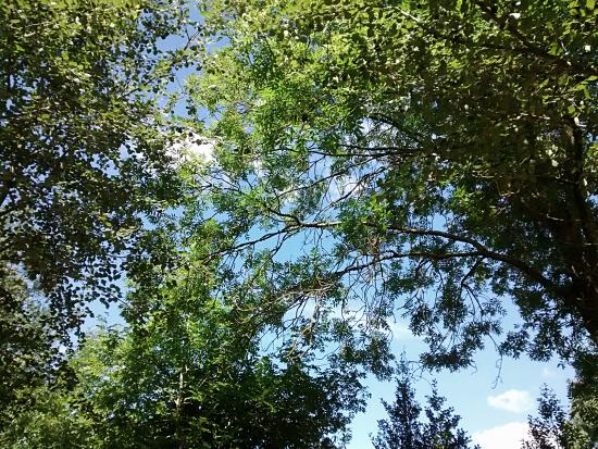....and over the backyard!
