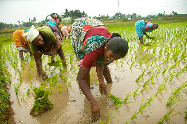 Tamil Nadu women in the fields